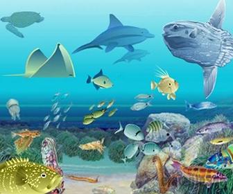 Nivel de Organización: Ecosistema