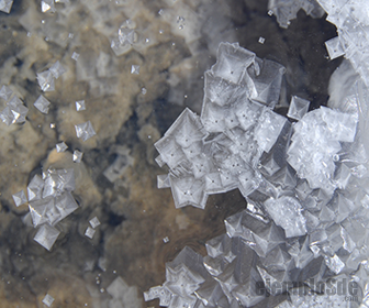 Las moléculas iónicas forman cristales